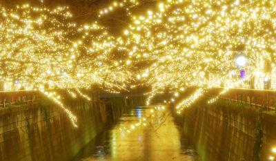 「冬の桜」42万球以上のイルミネーション