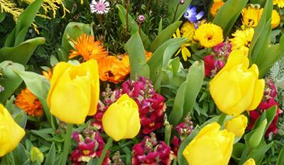 春はフラワーガーデンで海とお花の共演が